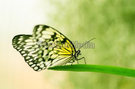 insecto mariposa polilla error bichos amarillo