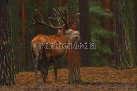 medio ambiente salvaje ciervo naturaleza