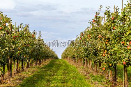 cosecha, de, apfler - 10280897