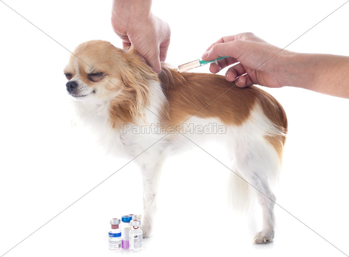 veterinario, y, perro - 10298669