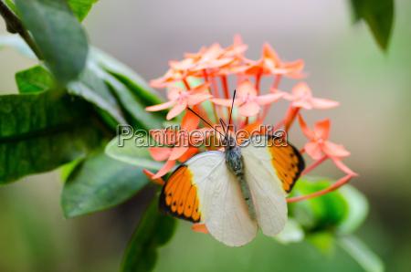 insecto flor planta mariposa primavera fondo