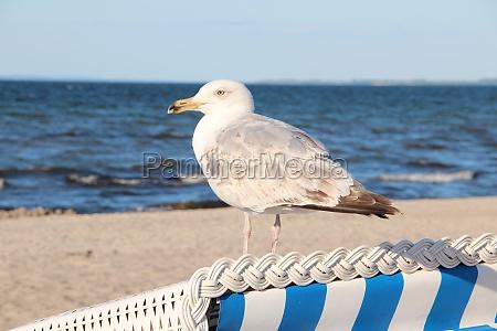 en la playa del mar baltico
