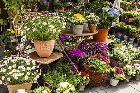 floristeria floristeria