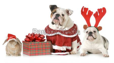 mascotas de navidad