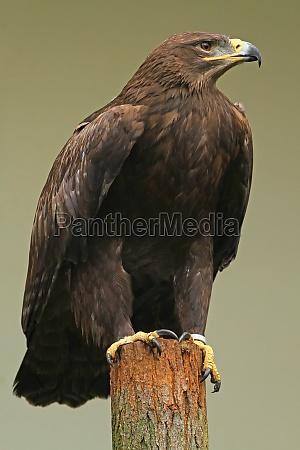 animal pajaro aves greifvogel aguila