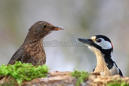 medio ambiente animal pajaro los animales