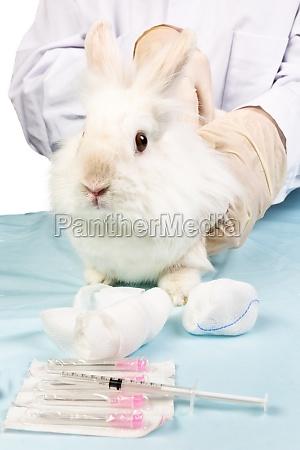 medico salud animal conejo liebre investigacion