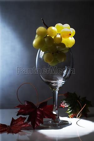 beber bebida vino alcohol vidrio copa