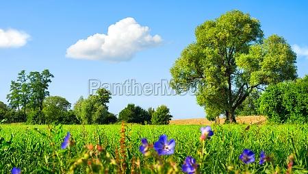 paisaje idilico del prado en el