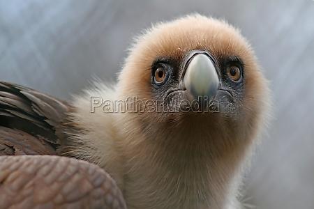 medio ambiente animal africa greifvogel naturaleza