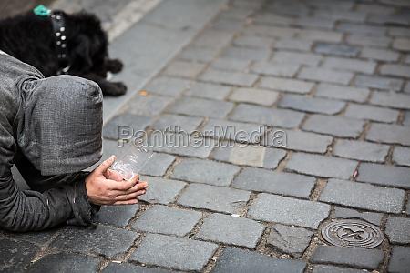 perro mendigo sufrir los enfermos solitario