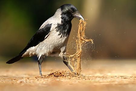 medio ambiente pajaro aves primavera cuervo