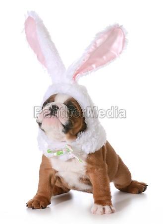 dulce color fiesta vacaciones animal mascotas