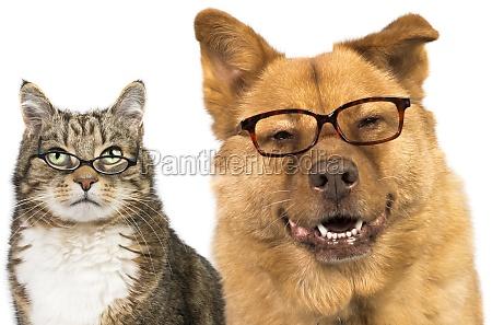 perro y gato que llevaba gafas