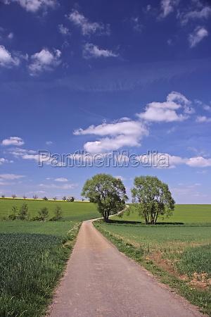 arbol horizonte verde campo primavera paisaje