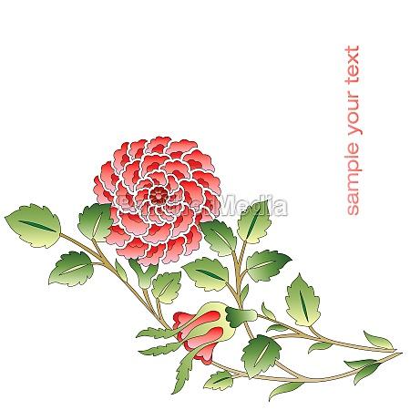 liberado flor planta rosa capullo arbusto