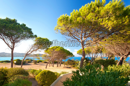 pine on the beach in sardinia