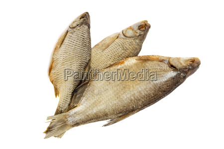 sal liberado pescado aislado seco rio