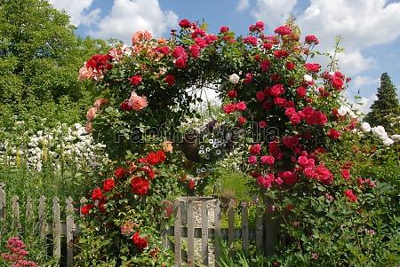 arco de rose