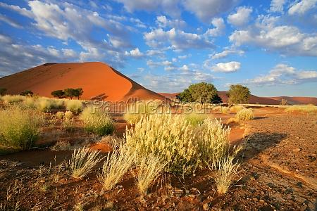 desierto duna las plantas del mundo