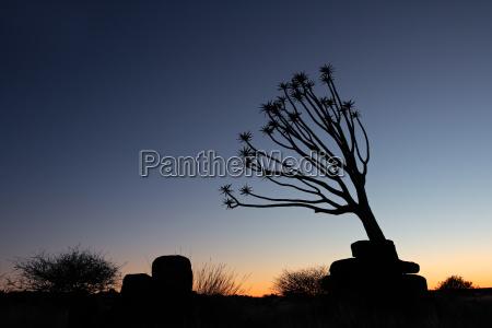 arbol horizonte desierto salvaje africa namibia