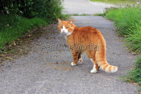 el gato rojo en la calle