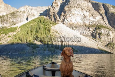 perro en canoa