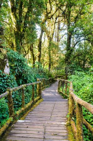 camino en el bosque de madera