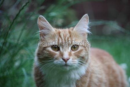 hermoso gato de pelo largo de