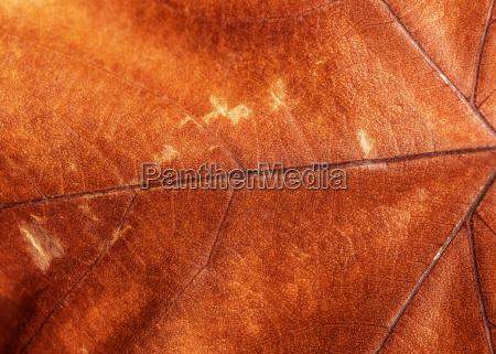 fondo de hoja seca marron