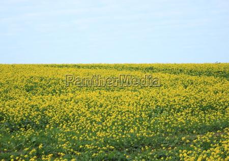 azul color flor planta verde agricultura