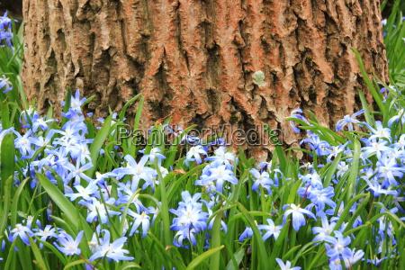 azul flor planta primavera al aire