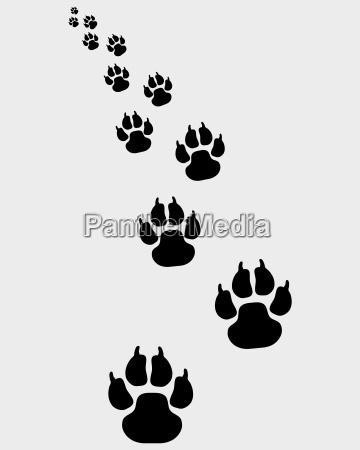 pasos paso perro pie presion pata