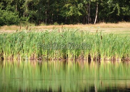 reflexion al aire libre mala hierba