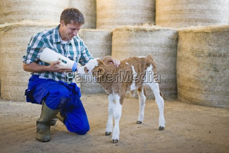 farmer hand rearing orphaned calf