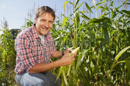 farmer inspecting maize crop in field