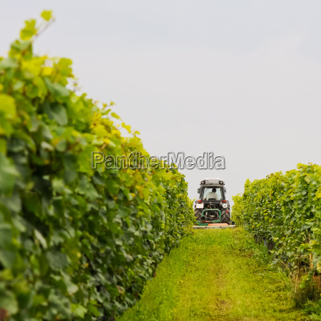 winery works with tractor in the