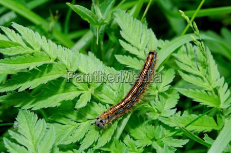 animal insecto mariposa verano veraniego oruga