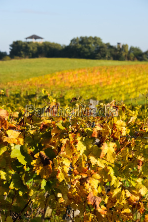 autumn in the vineyard with observation