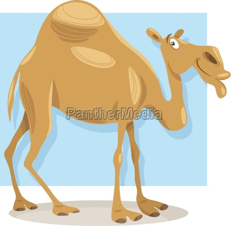 ilustracion de dibujos animados de camellos