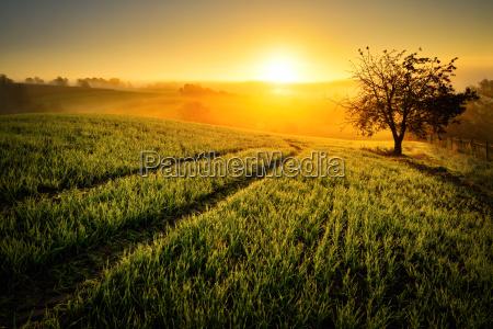 idilio rural en luz dorada
