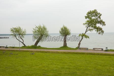 cuatro arboles en el lago