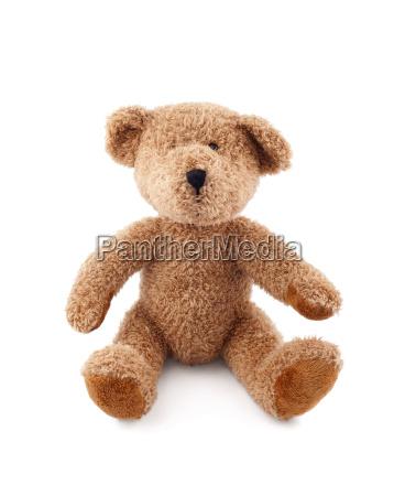 presente objeto solitario dulce animal oso