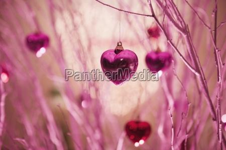 primer plano color arbol horizontalmente ornamento