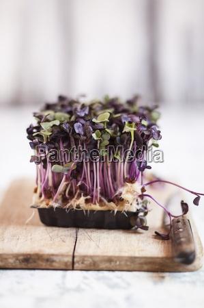 naturaleza muerta comida hoja salud primer