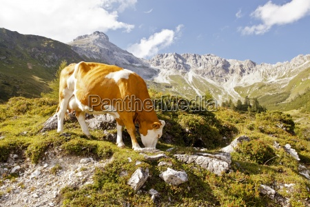 paseo viaje color montanyas piedra animal