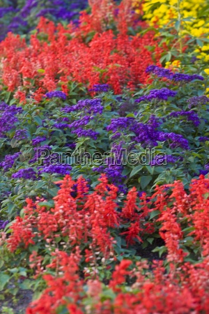 color jardin flor planta colorido verano
