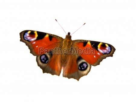 mariposa sobre fondo blanco con espacio