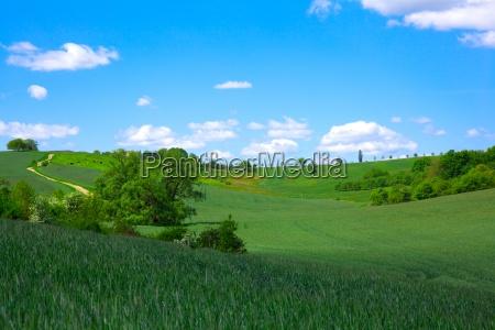 green field en blue sky