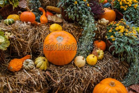 pumpkin ornament at autumn